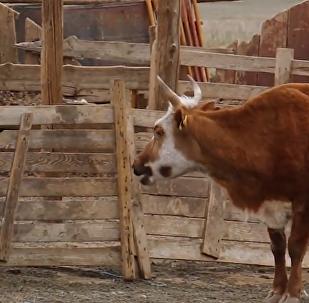 SMSky pomáhají mongolským pastevcům