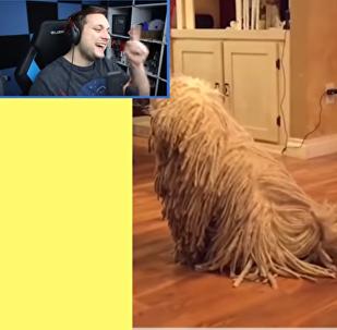 Reakce slovenského youtubera na toto video rozesmála internet