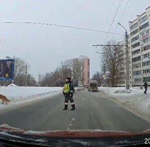 Pes a policista
