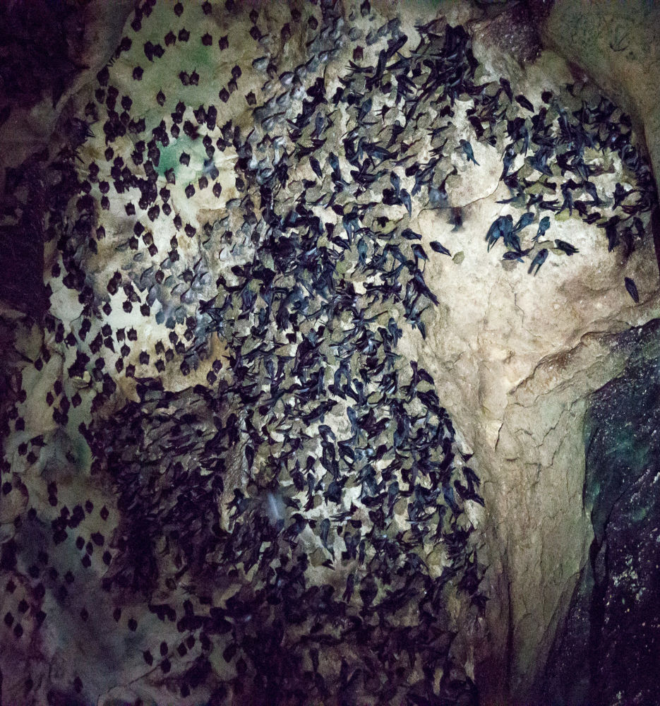 Netopýři v jeskyni Gomantong v Malajsii