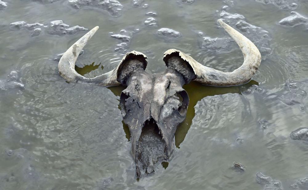 Lebka na jezeře Natron, Tanzanie