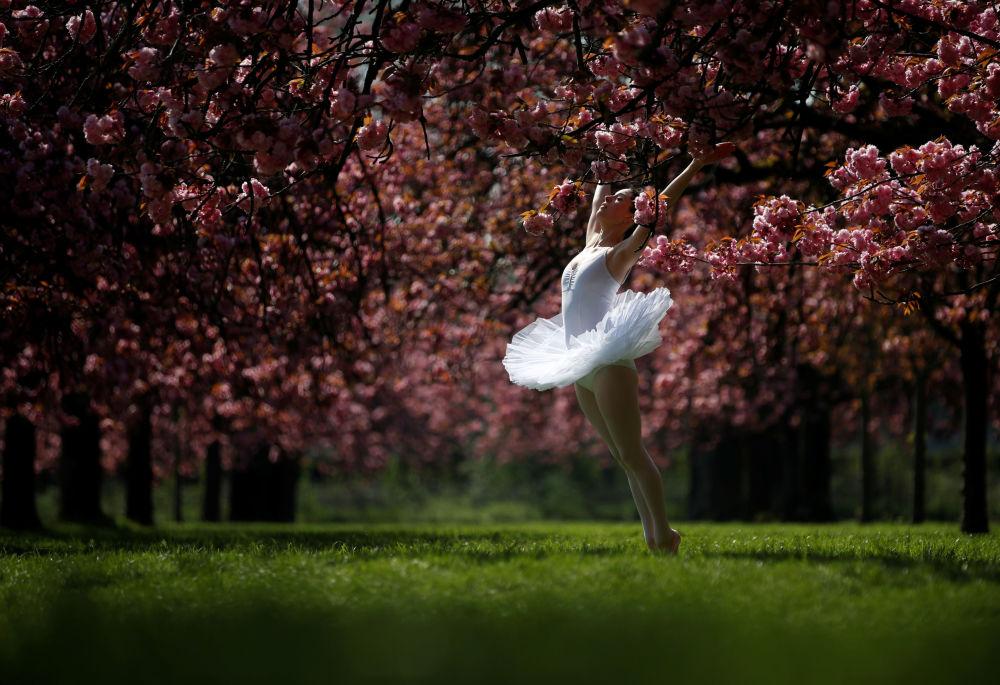 Tanečnice pod kvetoucí třešní v zahradách parku poblíž Paříže, Francie