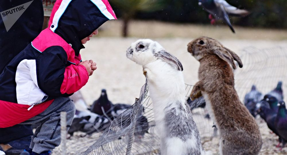 Dítě se dívá na králíky