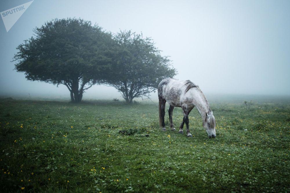 Kůň se pase v Majkopském rajónu v Adygejské republice.