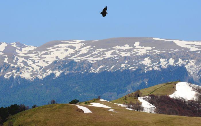 Orel letící nad horami Kavkazské chráněné krajinné oblasti.