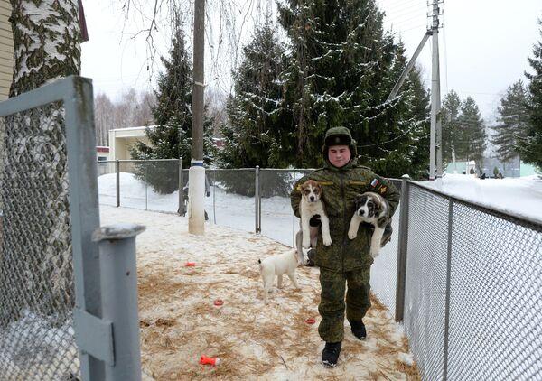 Jak se psi připravují na službu v armádě - Sputnik Česká republika