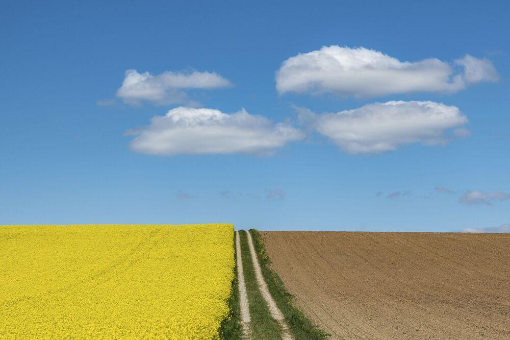 """""""Organizované"""" mraky nad kvetoucím řepkovým polem v Německu"""