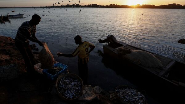 Rybáři umývají úlovek ve vodách řeky Nil v Súdánu - Sputnik Česká republika