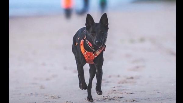 Psi našli v lese babičku, kterou pátrací oddíl hledal dva dny. Byla natolik vysílená, že se již neozývala - Sputnik Česká republika