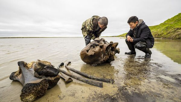 Unikátní nález: na Jamalu byla nalezena kostra dospělého mamuta - Sputnik Česká republika