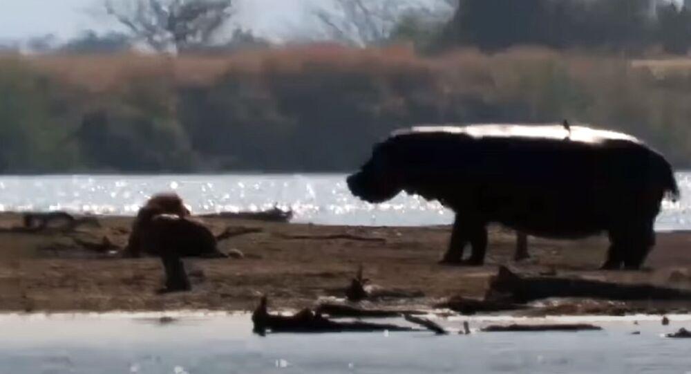 Kadry z Parku Krugera
