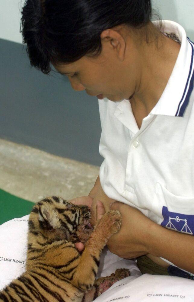 Žena kojí tygříka v Myanmaru.