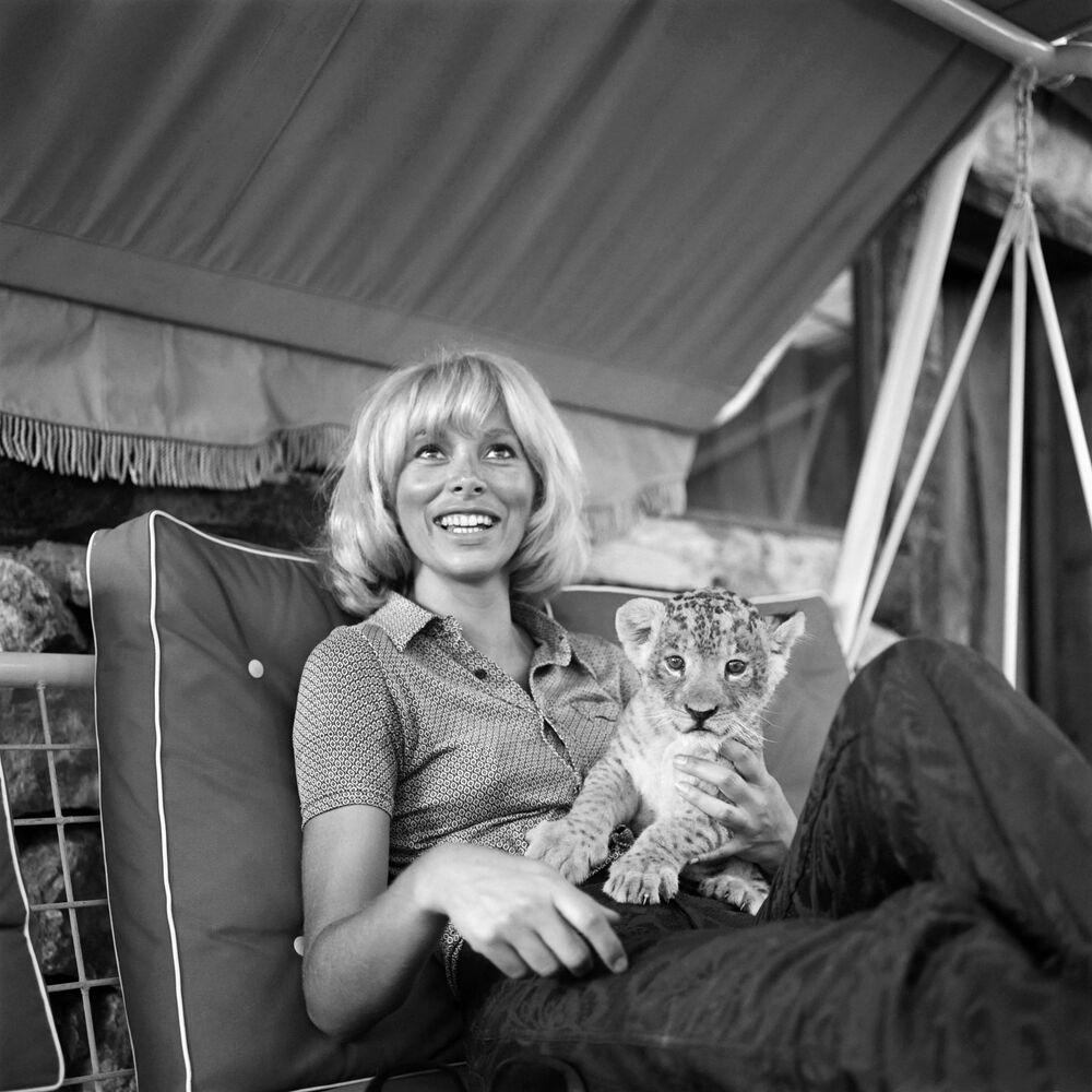 Francouzská herečka Mireille Darcová s tygříkem.
