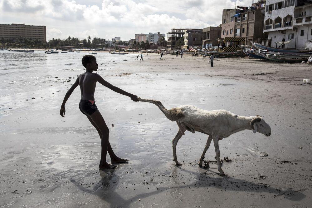 Mladý farmář táhne svou ovečku během oslav muslimského Svátku oběti v Senegalu.