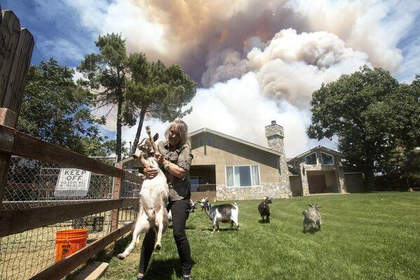 Žena zachraňuje kozy během požáru v Kalifornii - Sputnik Česká republika