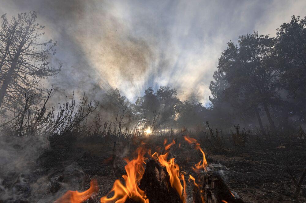 Plameny ohně v lesích v Kalifornii