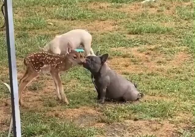 Fawn in love with mr.doggo