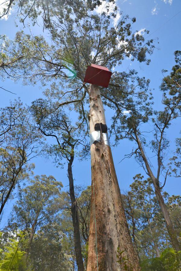 Dům na stromě v přírodní rezervaci Toolangi v Austrálii - Sputnik Česká republika