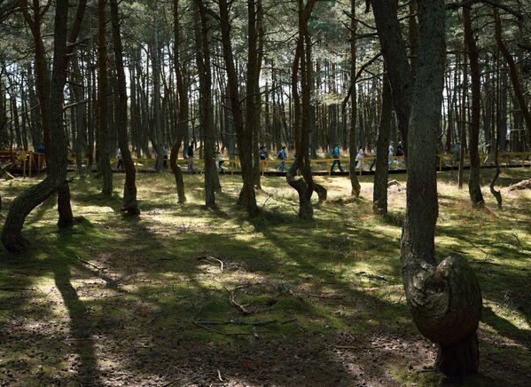 Turisté v Tančícím lese v národním parku Kurská kosa v Kaliningradské oblasti.  - Sputnik Česká republika