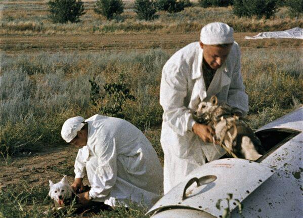Psí vesmírná revoluce. Před 60 lety do vesmíru letěly Belka a Strelka - Sputnik Česká republika
