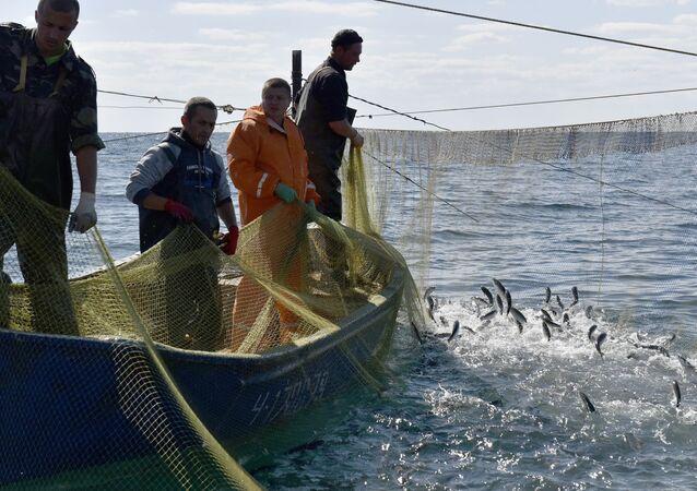 Masový výlov ryb