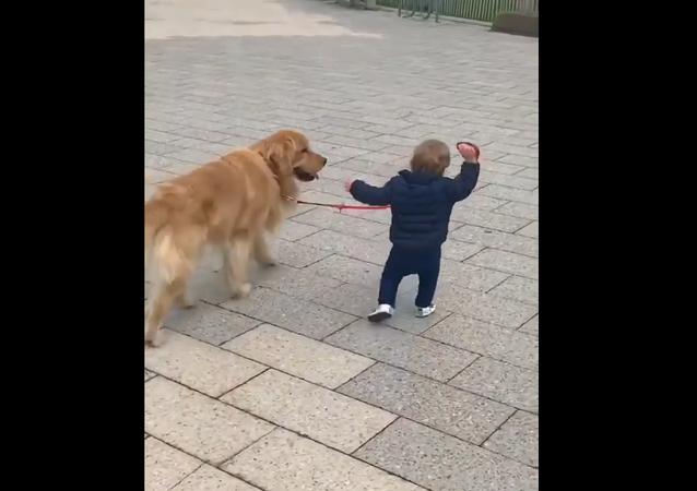 Retrívr prochází s malým klukem