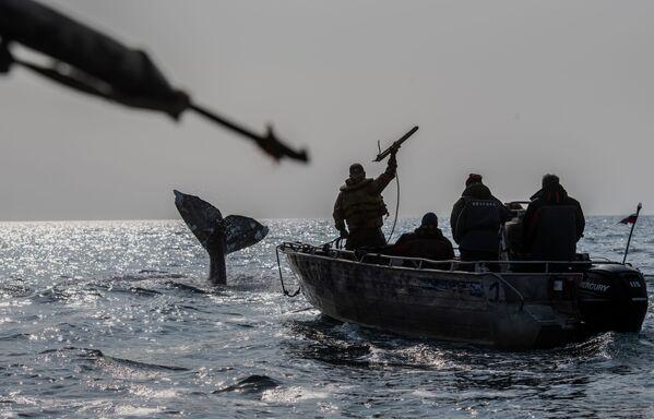 Velrybáři na lovu v Beringově úžině - Sputnik Česká republika