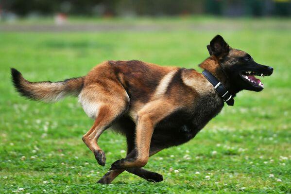 I psi chtějí zvítězit - Sputnik Česká republika