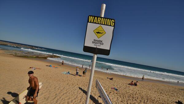 Značka varující před nebezpečím žraloků  - Sputnik Česká republika