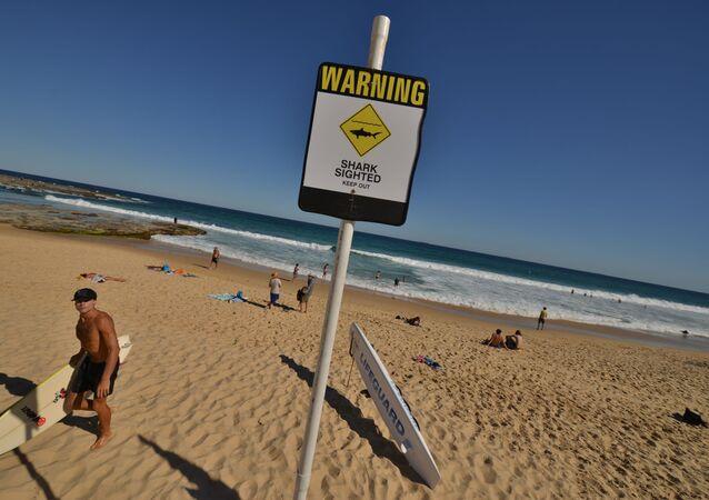 Značka varující před nebezpečím žraloků