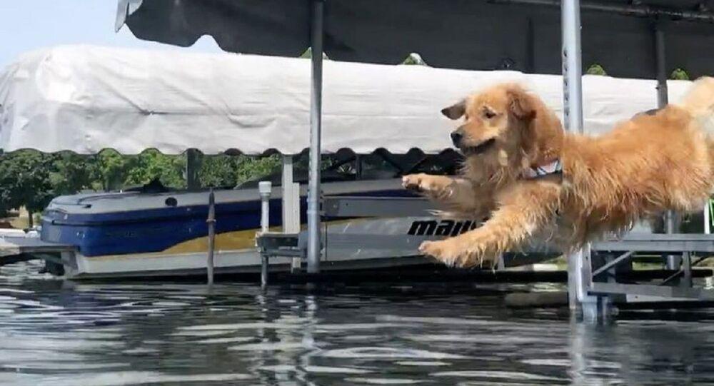Zlatý retrívr doprovází svého majitele při plavání