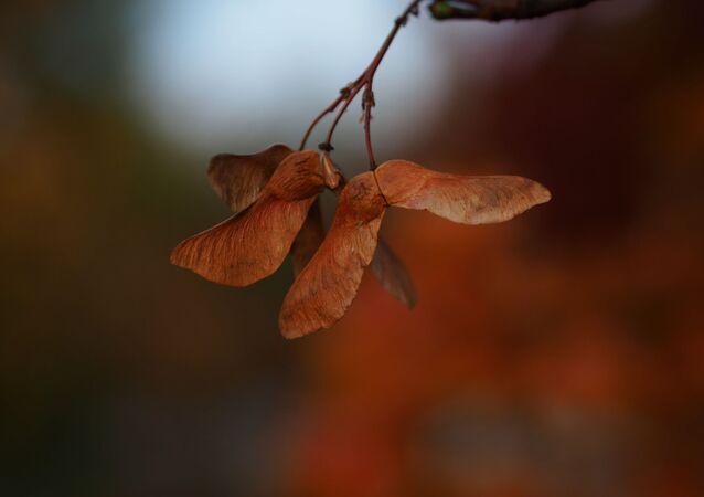 Podzim. Ilustrační foto
