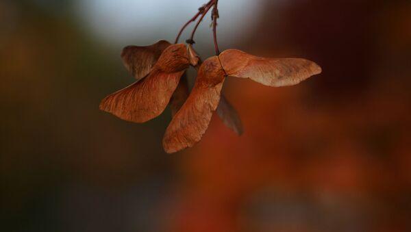 Podzim. Ilustrační foto - Sputnik Česká republika