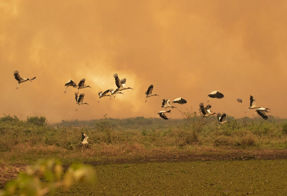 Ptáci prolétají nad územím Pantanalu