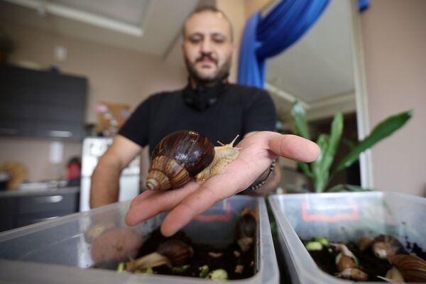 Odborník v oblasti masáže šneky v salonu krásy v Ammánu, Jordán - Sputnik Česká republika