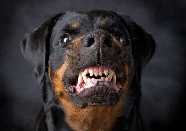 Agresivní pes. Ilustrační foto
