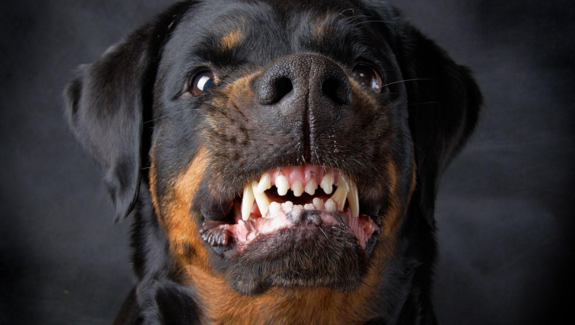 Agresivní pes. Ilustrační foto - Sputnik Česká republika, 1920, 02.04.2021