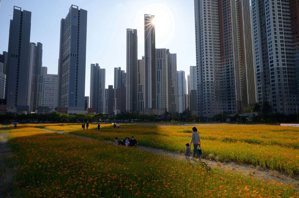Květinové pole v Soulu, Jižní Korea