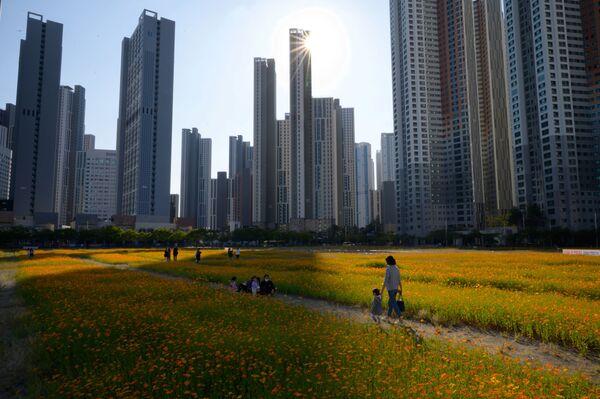 Květinové pole v Soulu, Jižní Korea - Sputnik Česká republika