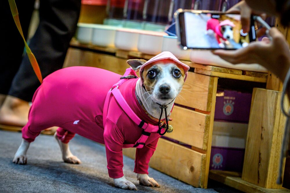 Pes oblečený v pyžamu na výstavě Pet Expo Thailand 2020 v Bangkoku.