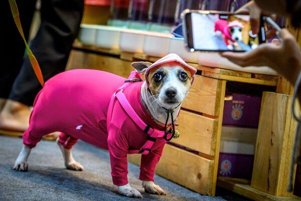 Pes oblečený v pyžamu na výstavě Pet Expo Thailand 2020 v Bangkoku. - Sputnik Česká republika