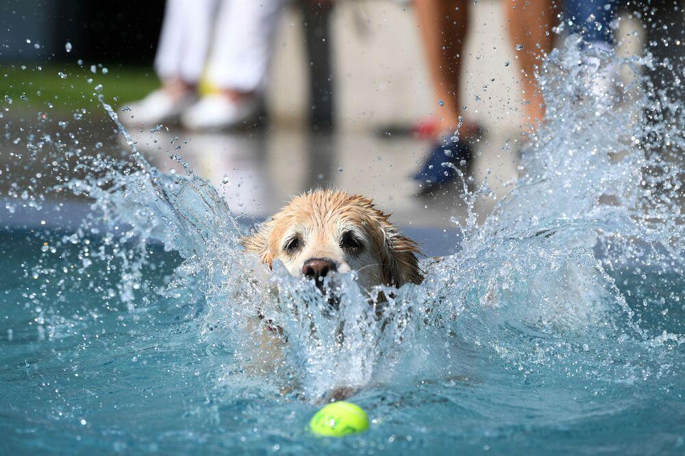 Pes skáče do vody na koupališti v Mnichově, Německo, 11. září 2020.