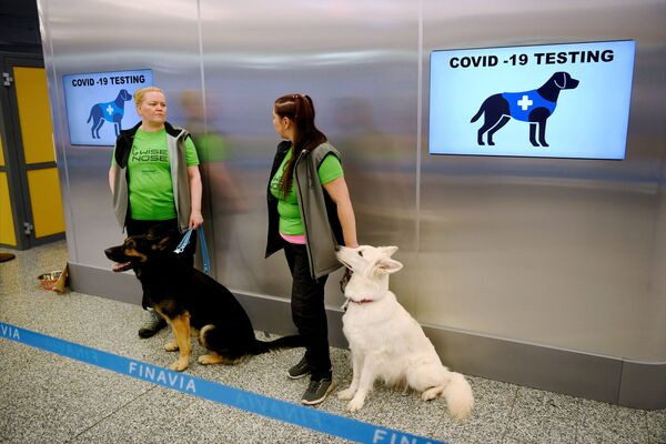 Zaměstnanci na letišti v Helsinkách se psy schopnými detekovat koronavir ve vzorcích cestujících. - Sputnik Česká republika