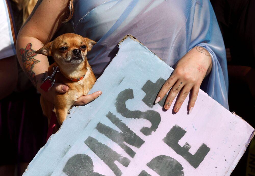 Demonstrantka nese psa během pochodu London Trans Pride 2020 v Londýně ve Velké Británii.