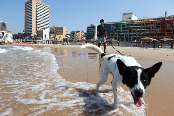 Muž venčí svého psa na pláži v izraelském Tel Avivu. - Sputnik Česká republika