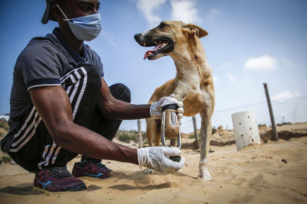 Palestinský dobrovolník společnosti péče o zvířata a postižený pes Gaze.