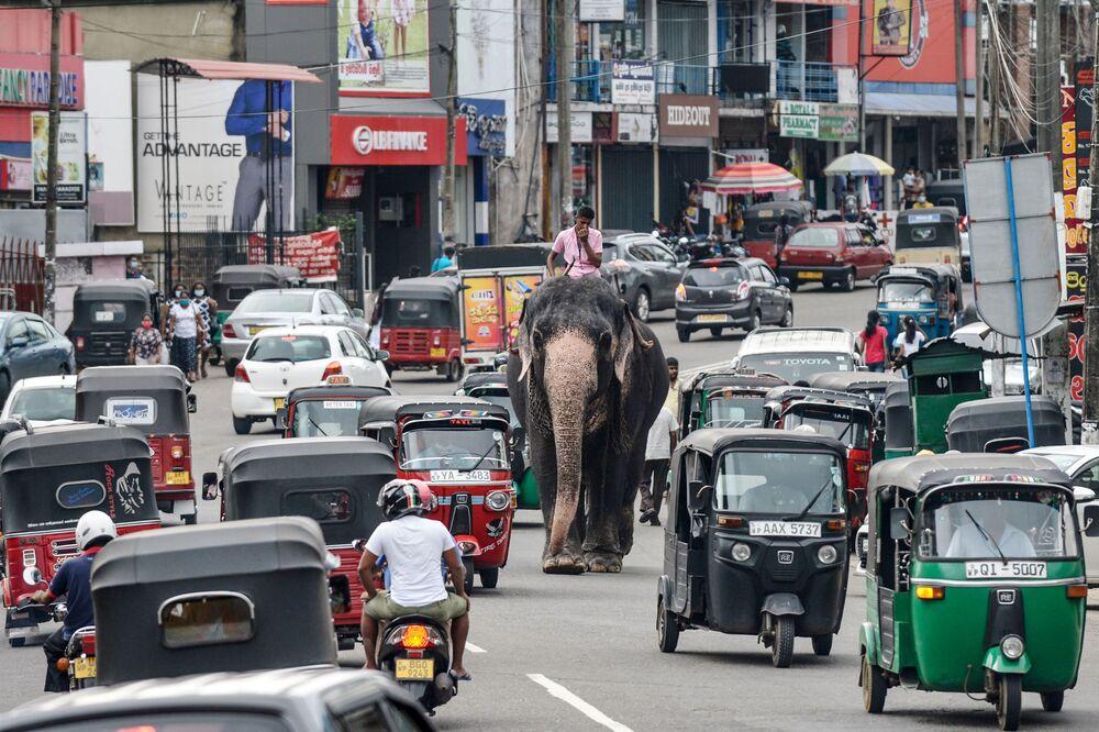 Mladý muž jede na slonu po ulici s automobilovým provozem v Pilijandalu na Srí Lance, Columbo