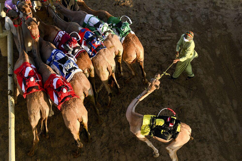 Velbloudi s robotickými žokeji během závodu v dubajské vesnici al-Marmoom, Spojené arabské emiráty
