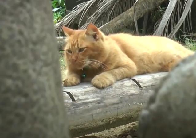 Tento kocour už dva roky pravidelně navštěvuje hrob svého majitele. S čím je to spojeno?