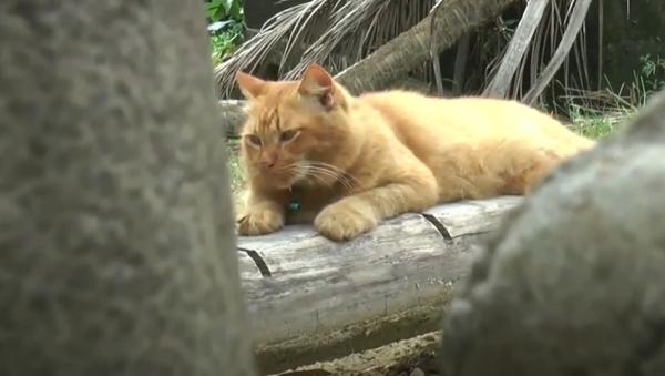 Tento kocour už dva roky pravidelně navštěvuje hrob svého majitele. S čím je to spojeno? - Sputnik Česká republika
